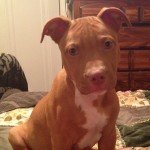 Wyandotte Michigan Officer Steve Sabo Shoots and kills Puppy