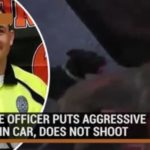Police officer does NOT shoot aggressive dogs, puts them in car THIS IS HOW ITS DONE OFFICERS!!!